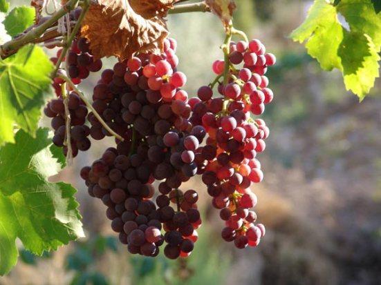 culinary-wine