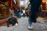 Istanbul's Innovative Solution for Strays